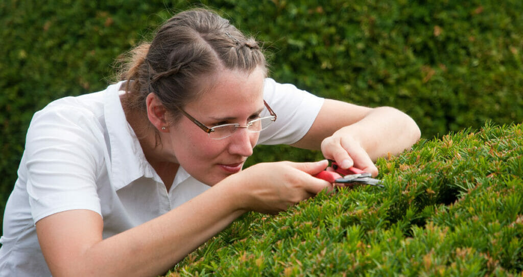 Driven to Succeed   Woman focused on cutting grass with scissors